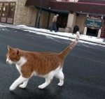 1318866724_freddie-cat-mayor-shannon15b15d.jpg